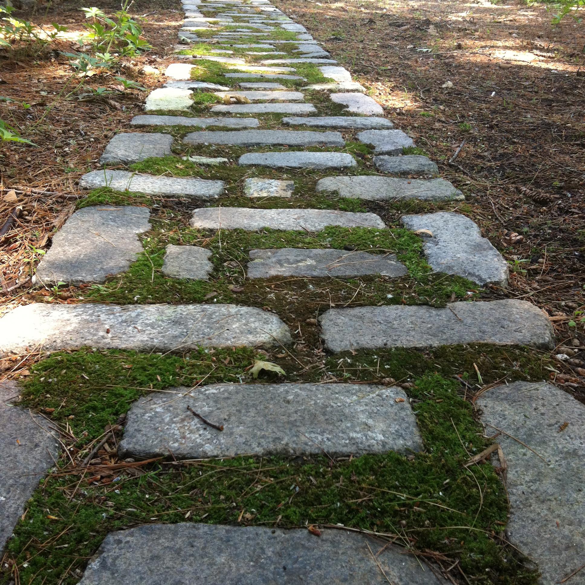 Img Moss Between Patio Stones